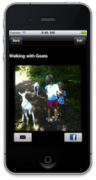 Screenshot of a photo of a small child walking down a wooded lane with two goats.