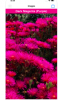 A smartphone's screen featuring purple flowers. Above the flowers is a label with the same color as the flowers and the words written in white: Dark Magenta (Purple).