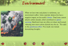 Screen displaying information about the environment with a picture of a forest fire.